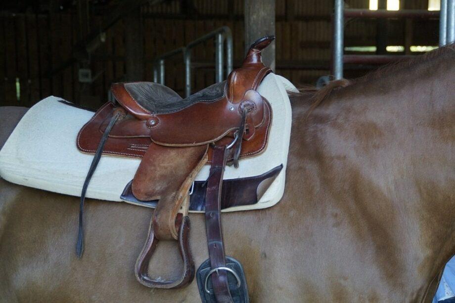 Bien laver le matériel d'équitation
