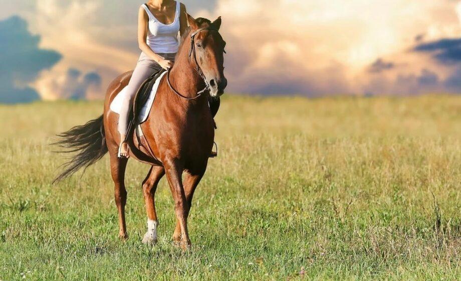 Comment bien entretenir les chevaux ?